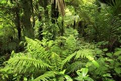 Bosque tropical fotos de archivo libres de regalías