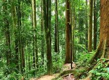 Bosque tropical fotografía de archivo libre de regalías