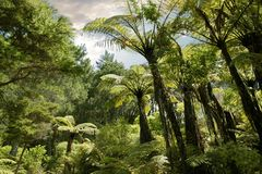 Bosque tropical cerca de Hahei Fotos de archivo libres de regalías