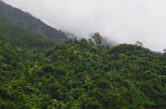 Bosque tropical cerca de los acantilados de Quingshui, Taiwán Fotos de archivo libres de regalías