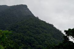 Bosque tropical cerca de los acantilados de Quingshui, Taiwán Imagen de archivo
