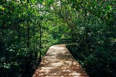 Bosque tropical con la calzada Foto de archivo libre de regalías
