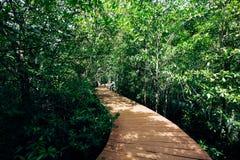 Bosque tropical con la calzada Imagen de archivo libre de regalías