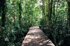 Bosque tropical con la calzada Fotos de archivo