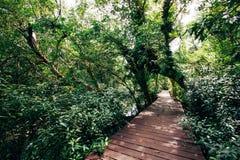 Bosque tropical con la calzada Foto de archivo