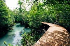 Bosque tropical con la calzada por el vapor Imagenes de archivo