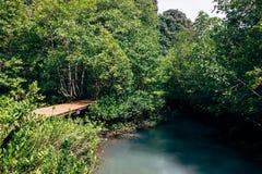 Bosque tropical con la calzada por el vapor Foto de archivo libre de regalías
