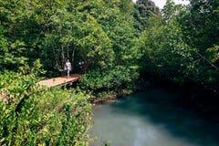 Bosque tropical con la calzada por el vapor Fotos de archivo