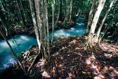 Bosque tropical con vapor Imágenes de archivo libres de regalías