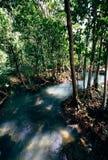 Bosque tropical con vapor en Krabi, Fotos de archivo