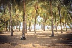 Bosque tropical da palma da ilha do fundo do vintage das palmeiras da praia com paisagem da sombra imagens de stock royalty free