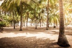 Bosque tropical da palma da ilha do fundo do vintage das palmeiras da praia com paisagem da sombra imagem de stock royalty free
