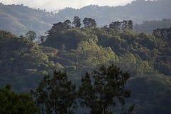 Bosque tropical de Carpintera del La Foto de archivo libre de regalías