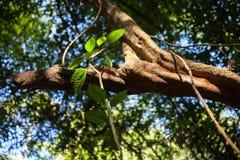 Bosque tropical de la madrugada de Tailandia en la salida del sol Imágenes de archivo libres de regalías