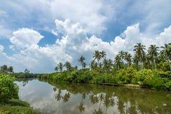 Bosque tropical de la palma en la orilla del río Mangro tropical de los matorrales fotos de archivo libres de regalías