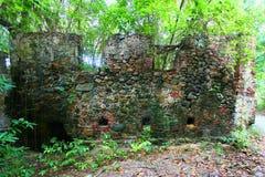 Bosque tropical de las Islas Vírgenes Foto de archivo libre de regalías