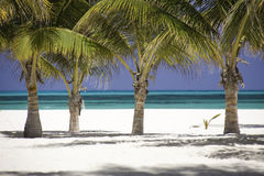 Bosque tropical del Caribe de la palmera Foto de archivo libre de regalías