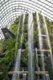 Bosque tropical del jardín botánico, Singapur 1 Fotografía de archivo