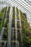 Bosque tropical del jardín botánico, Singapur 2 imágenes de archivo libres de regalías