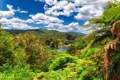Bosque tropical del valle y del lago volcánicos en un día soleado, Nueva Zelanda de Waimangu frying Pan imagen de archivo