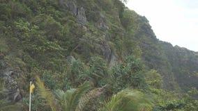 Bosque tropical denso con las vides torcidas de la liana que cuelgan de altos árboles de la selva tropical de la selva metrajes