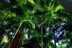 Bosque tropical en el parque nacional de Lamington, Australia fotografía de archivo