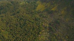 Bosque tropical en las montañas Isla Filipinas de Camiguin almacen de metraje de vídeo
