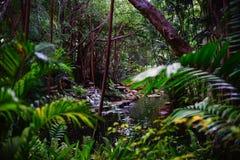 Bosque tropical en Tailandia Fotos de archivo