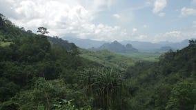 Bosque tropical en un día soleado almacen de video