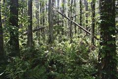 Bosque tropical enorme Imagen de archivo