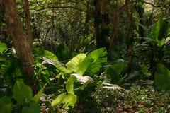 Bosque tropical verde de la selva en luz del sol foto de archivo