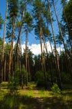 Bosque ucraniano Fotografía de archivo
