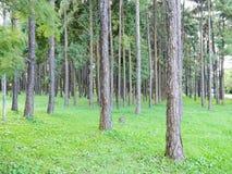 Bosque urbano Fotos de archivo