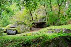 Bosque verde. Imagen de archivo libre de regalías