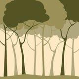 Bosque verde Foto de archivo