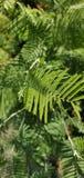 Bosque verde fotografía de archivo libre de regalías