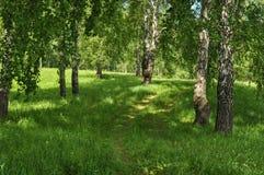 Bosque verde Imágenes de archivo libres de regalías