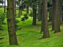 Bosque verde Imagenes de archivo
