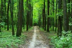 Bosque verde Imagen de archivo libre de regalías