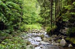 Bosque verde Fotos de archivo