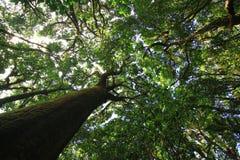 Bosque verde Imagen de archivo
