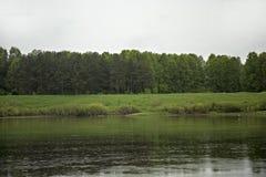 Bosque verde cerca del banco del río Fotografía de archivo libre de regalías
