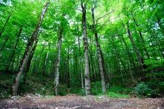 Bosque verde claro Imagen de archivo