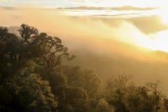 Bosque verde con el rayo de luces en la mañana fotografía de archivo libre de regalías
