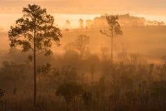 Bosque verde con el rayo de luces en la mañana Imagenes de archivo