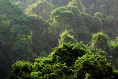 Bosque verde con la luz Fotografía de archivo