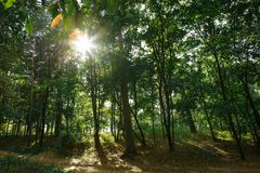 Bosque verde con las raíces y la madera de deriva foto de archivo libre de regalías