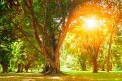 Bosque verde con los árboles viejos Imagenes de archivo