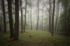 Bosque verde con niebla Foto de archivo libre de regalías