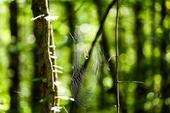 Bosque verde con un web de araña brillante Imagen de archivo